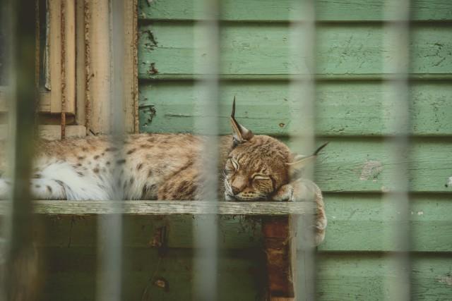 Gyvūnai švenčia zoologijos sodo 77-ąjį gimtadienį