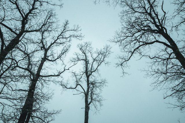 Medžiai kabinasi į debesis